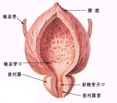 尿道炎发生的原因有哪些